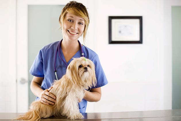 Canine Flu Information and Fact Sheet